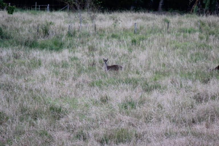 Bambi?