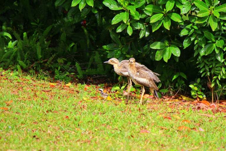 Off for a walk - the chick leading the way