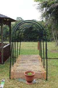 A framework of hoops installed to hold up the wire mesh. (There are climbing beans in this bed so it had to be tall)
