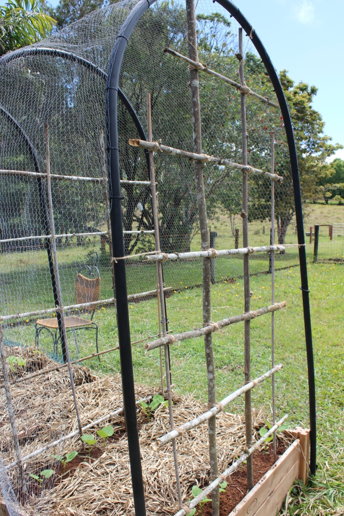 The finished trellis in place, ready for the green beans to climb