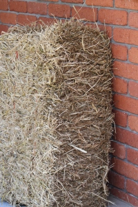 The bale of hay Caramel Chicken was clucking around