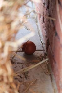 Yep, that's an egg!